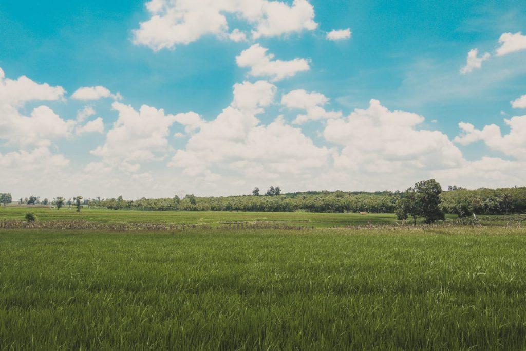 Gambar hasil editing soft brown pemandangan menggunakan lightroom mobile
